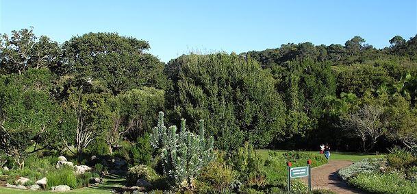 Voyage jardins de kirstenbosch afrique du sud comptoir for Jardin kirstenbosch