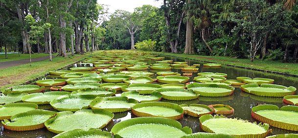 Jardin Des Pamplemousses Ile Maurice Arts Et Voyages
