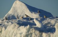 Sur Mesure au Groenland : Découverte de la Baie de Disko