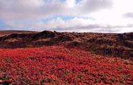 Sur Mesure en Islande : Charme et détente  en Islande