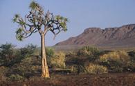 Sur Mesure en Namibie : De Windhoek à Cape Town