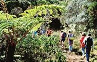Sur Mesure à La Réunion : La Rando Bourbon, entre cirques et pitons