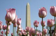 Séjour au États-Unis : Séjour dans la région capitale